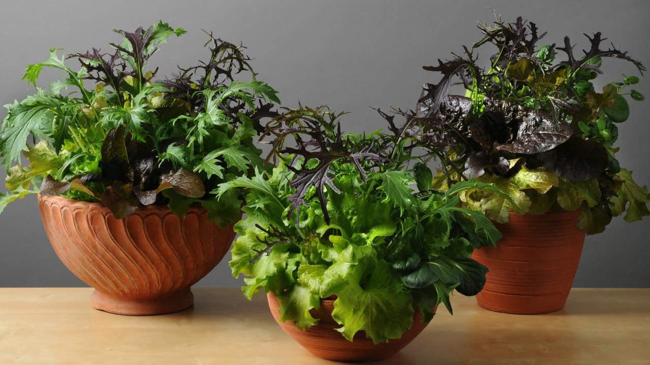 sustainable kitchen tips grow